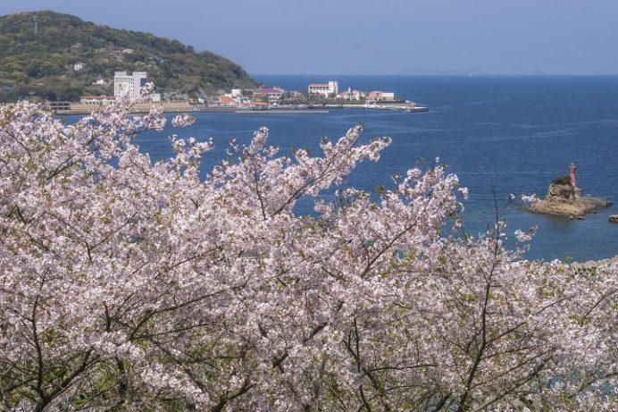 香焼総合公園(長崎市)の桜、花見