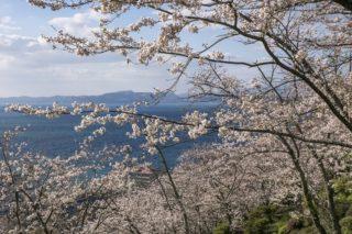 「とけん山公園の桜の見頃2020は?」(小浜)【夜桜OK、駐車場あり、景観良し】