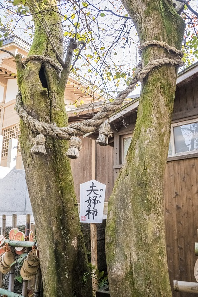 温泉神社(長崎県の温泉神社)、雲仙地獄の柿