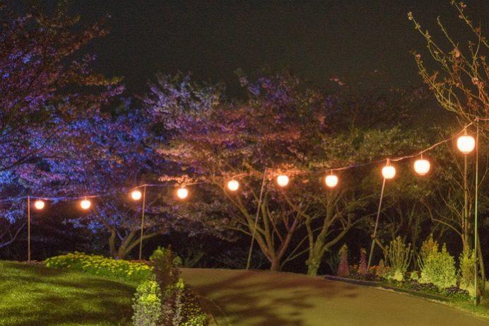 田平公園(平戸市田平町)の桜と花見