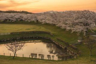 「百花台公園の桜」(雲仙市)【花見の激おすすめ穴場!】~見頃情報あり