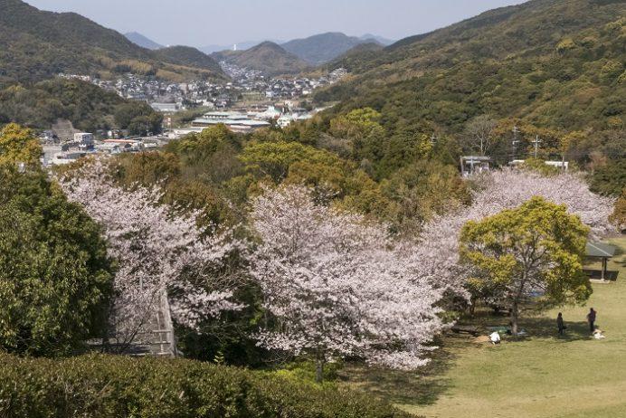 元宮公園(長崎市布巻町、三和地区)の桜、花見