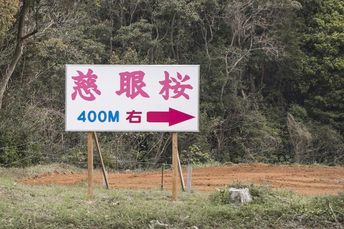 慈眼桜(平戸市木ヶ津カトリック教会付近)の行き方