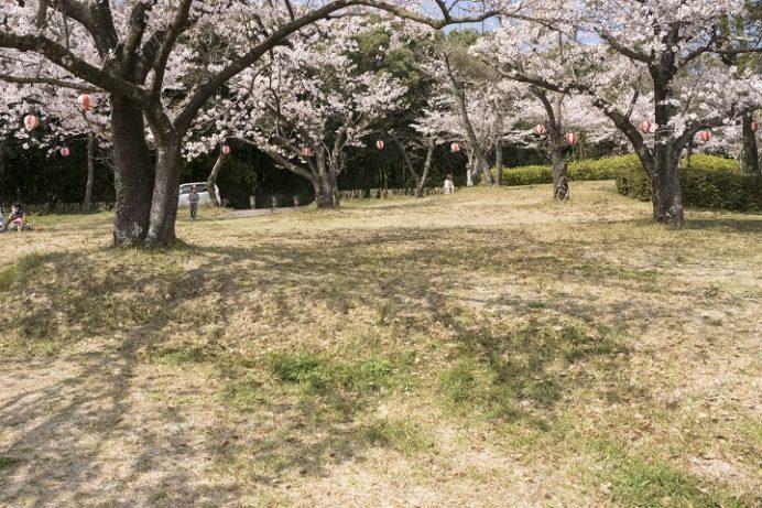 眉山治山祈念公苑(島原市上の原)の桜、花見