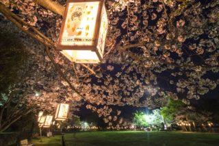 「城山公園の桜2020」(川棚町)【お花見ランチ、夜桜ともOK!】~開花はいつ?