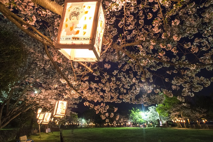 「城山公園の桜2021」(川棚町)【お花見ランチ、夜桜ともOK!】~開花はいつ?