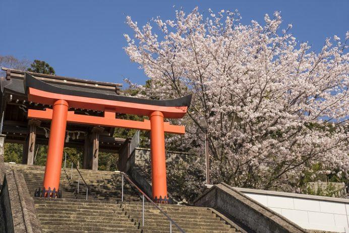 八坂神社(長崎市鍛冶屋町)の桜