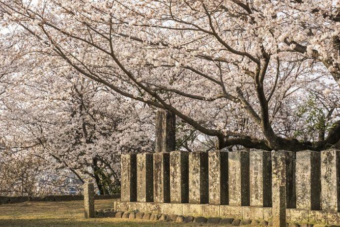 旧円融寺庭園(長崎県大村市玖島)、国指定名勝の桜、花見