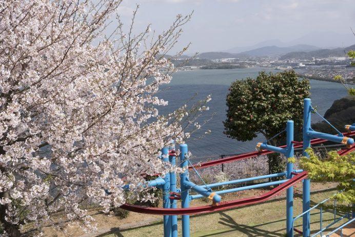 のぞみ公園( 諫早市多良見町木床)の桜、花見