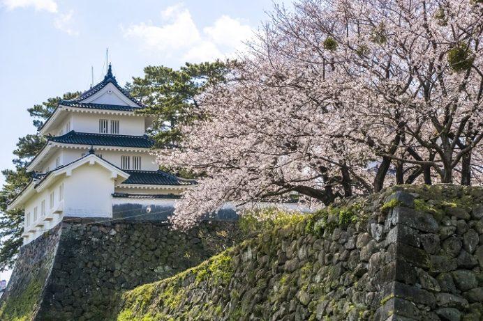 島原城(長崎県島原市城内)の桜と花見
