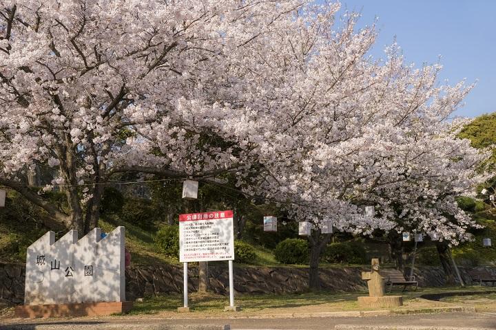 城山公園(長崎県東彼杵郡川棚町)の桜と花見