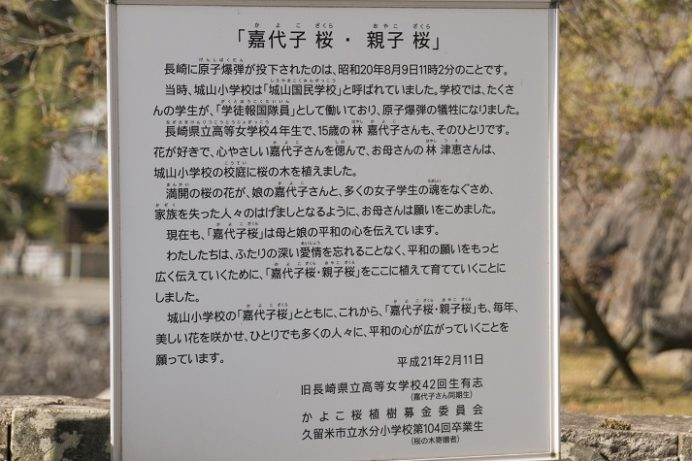 清水寺(長崎市鍛冶屋町)の嘉代子桜