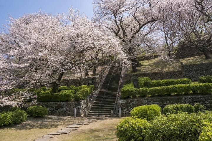 【2021年の見頃は?】「旧円融寺庭園の桜」(大村市)~名画のような風景でお花見できます