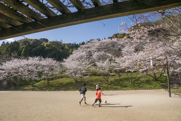 猫山ダム(佐世保市黒髪町)の桜と花見