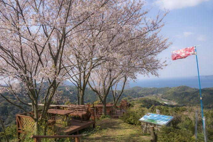 長尾城跡公園(長崎県西海市)の桜と花見