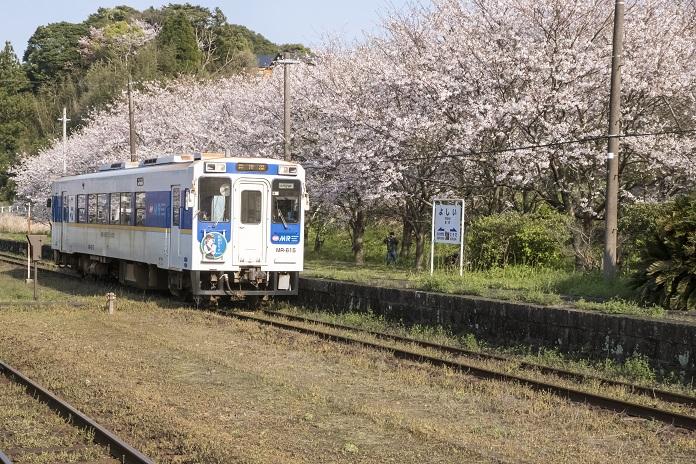 【満開はいつ?開花速報2021】「吉井駅の桜」(佐世保)~インスタ映えSPOT!