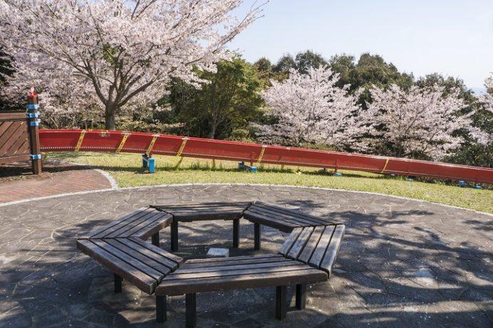 花高中央公園(佐世保市花高)の桜と花見