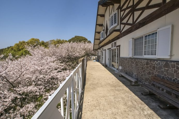 崎野自然公園(西彼杵郡時津町)の桜と花見