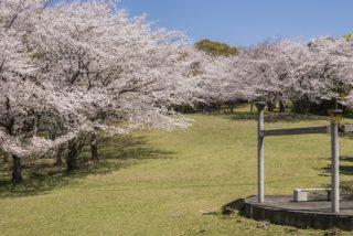 【満開いつ?開花速報2021!】「千尽公園の桜」(佐世保市)~家族でお弁当花見にド最適!