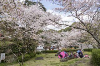 【満開はいつ?開花速報2021!】「大悲観公園の桜」(佐世保市)~キッズ&ワンちゃん連れにド最適