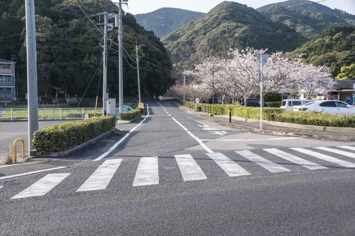 皿山公園、真竹谷のしだれ桜の行き方(佐々町)