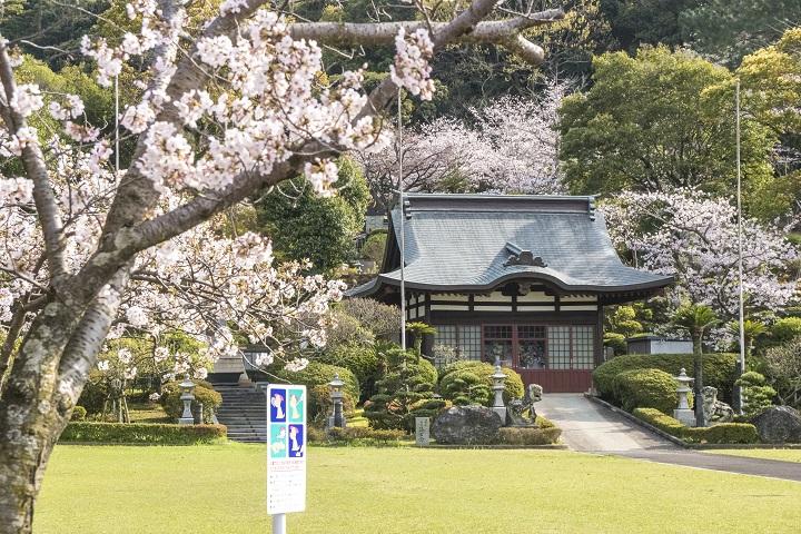 【満開いつ?開花速報2021!】「東公園 海軍墓地の桜」(佐世保)~慰霊と平和祈念のための観桜SPOTです