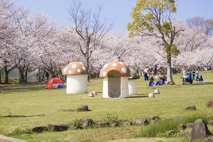 【満開いつ?開花速報2021!】「天神公園の桜」~佐世保定番の花見SPOT!