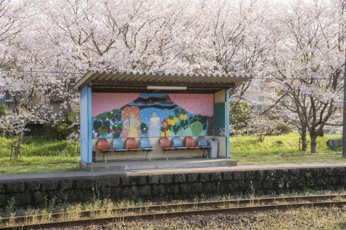 吉井駅(長崎県佐世保市)の桜と花見