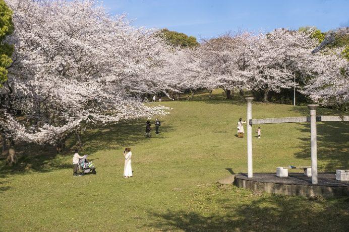 千尽公園(佐世保市千尽町)の桜と花見