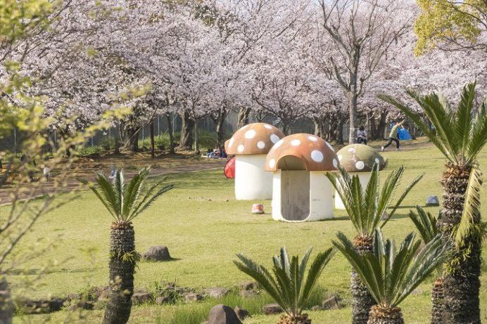 天神公園(佐世保市天神町)の桜と花見