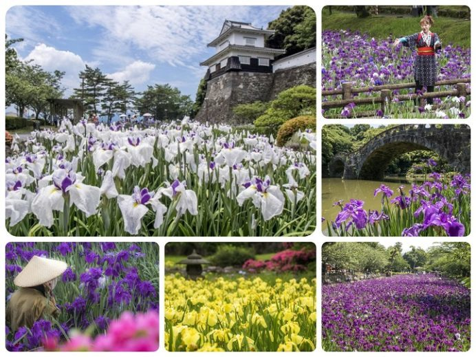 長崎県の花菖蒲園