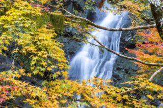 【見頃速報2021!】「滝の観音の紅葉」(長崎市平間町)~東長崎のウルトラ穴場