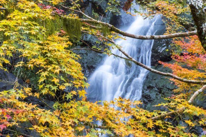 滝の観音の紅葉(長崎市平間町)