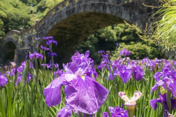 諫早公園の花菖蒲(長崎県高城町)、諫早眼鏡橋