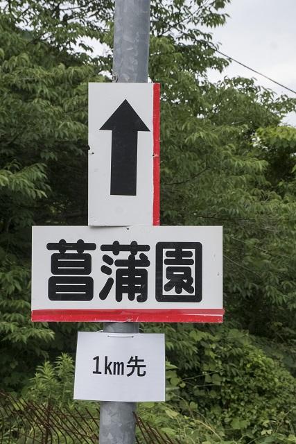 西海園芸の花菖蒲園(東彼波佐見町)