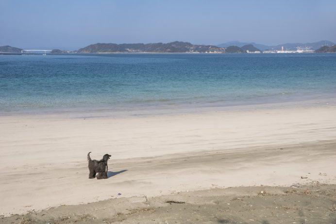 くじら浜海水浴場(長崎市野母崎地区)