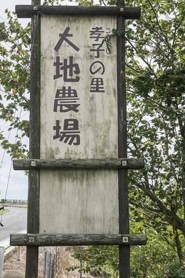 孝子の里・大地農場(南島原市島原市加津佐)のひまわり