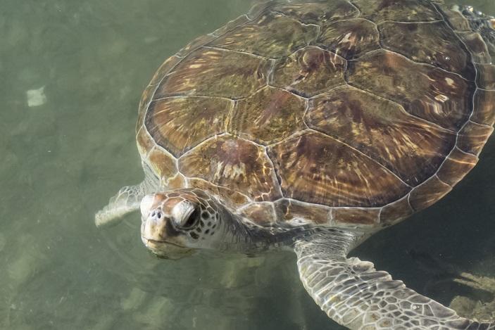 深堀で【ウミガメと会えます!】
