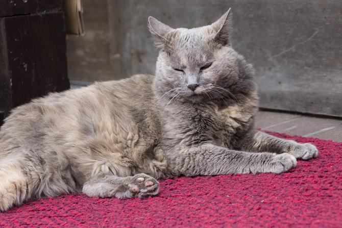 中通り商店街(長崎市諏訪町)の猫