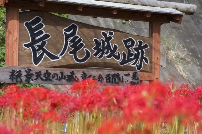 長尾城跡公園(長崎県西海市)の彼岸花