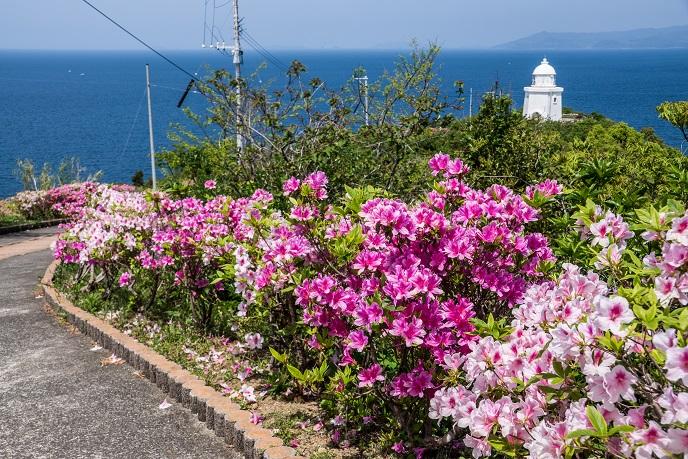伊王島灯台(長崎市)とツツジ