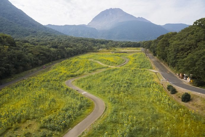 しまばら火張山公園(長崎県島原市上折橋町)のヒマワリ