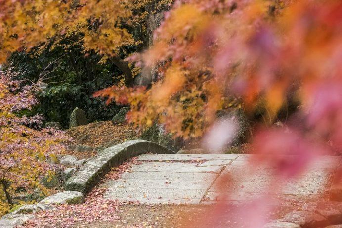 諫早公園(諫早市高城町 眼鏡橋あり)の紅葉