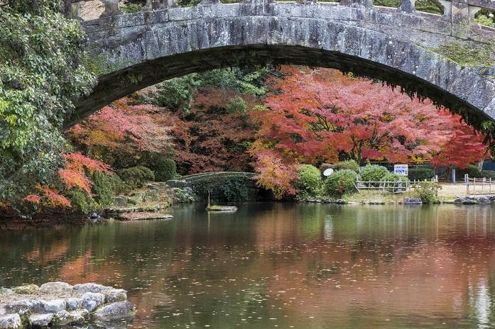 〈諫早公園の紅葉が超キレイ!〉【今が見頃MAX】12月13日(日)
