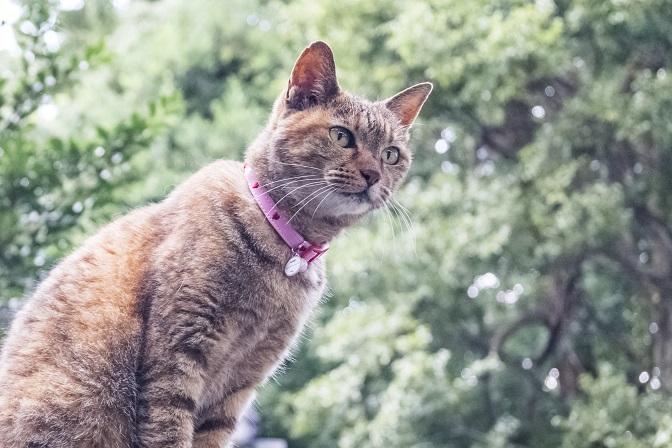 松森天満宮(松森神社)、長崎市上西山町の猫