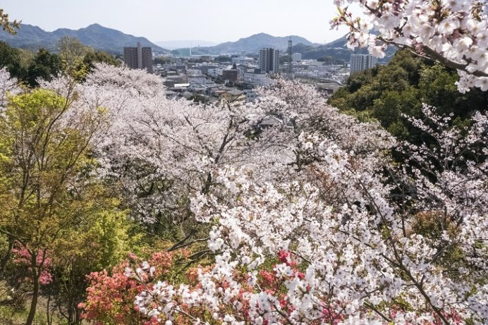 【満開はいつ?開花速報2021!】「尾崎公園の桜」(佐世保)~超絶穴場!