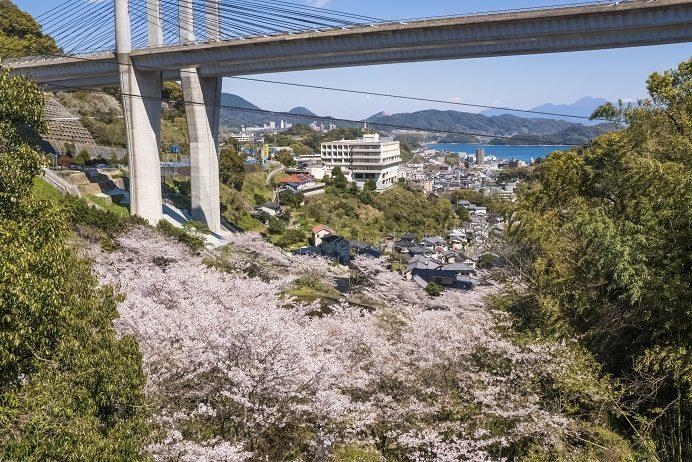 芒塚(長崎市夢大橋公園)の桜、花見