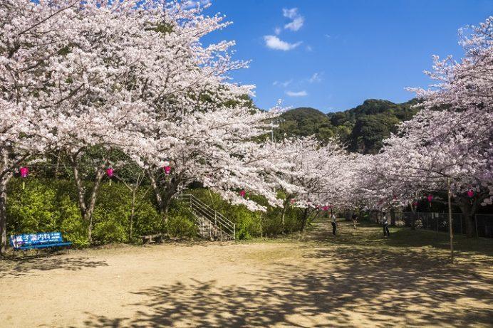 鹿尾川公園(長崎市)の桜と花見