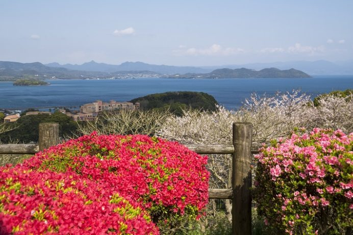 西海橋公園(佐世保市針尾東町)のツツジ、桜と花見