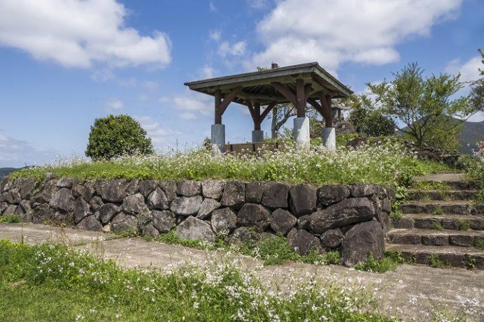 鉢巻山(長崎県大村市)のハマダイコン